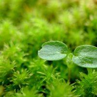 すくすくと成長する植物