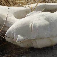 ずたぼろに朽ちた彫刻