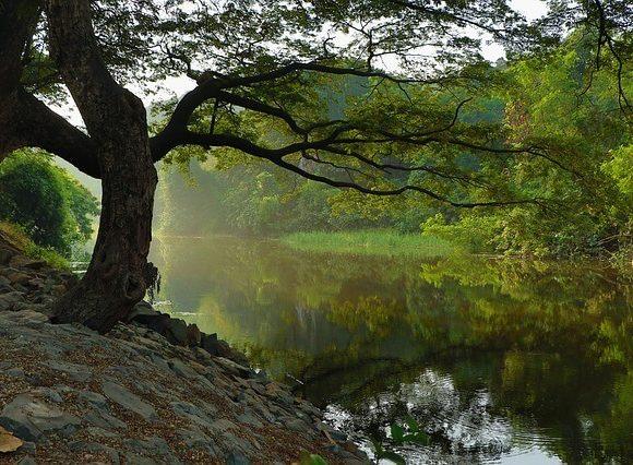 ひっそりとした湖