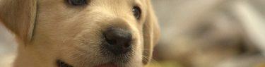 鼻をくんと鳴らす子犬