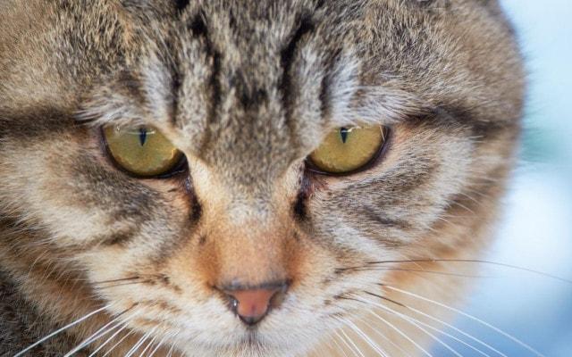 ずんと迫力を見せるネコ