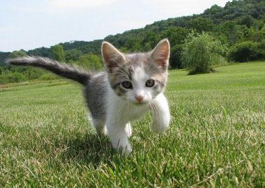 たったっと走るネコ