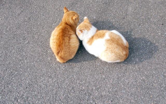 ちんまりとまとまるネコ