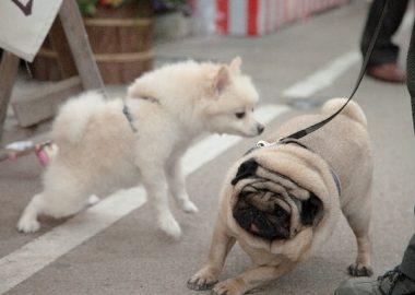 くくっとリードに逆らう犬