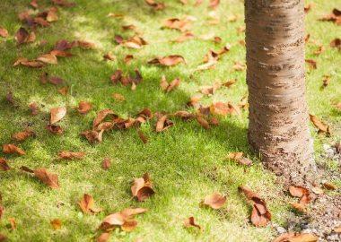 ぱさりと枯れ葉が落ちる