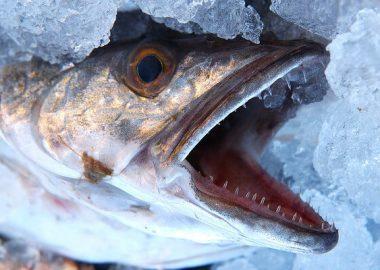 ぱっかりと口の開いた魚