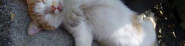 くにゃりと寝るネコ