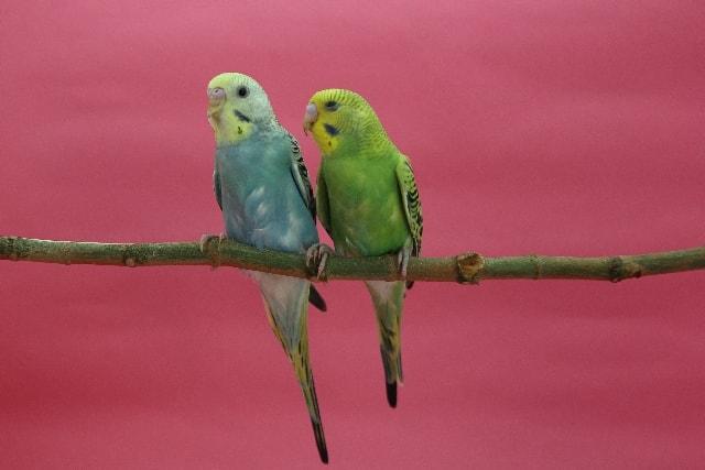 ちーちーと小鳥が鳴く