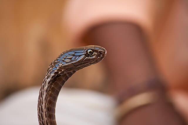 にょろりとするヘビ