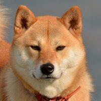くふんと鼻をならす犬