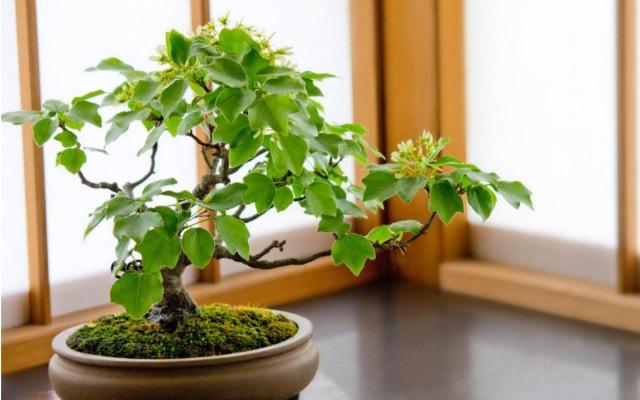 こぢんまりとした盆栽