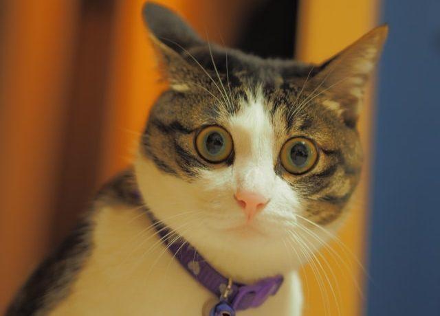 ぎくっとした顔のネコ