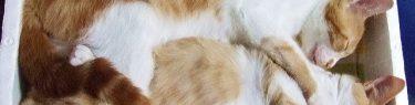 ぎちりと寄り添うネコ