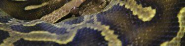 うねうねととぐろを巻くヘビ