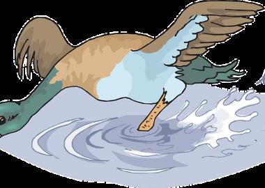 びちゃりと水を跳ね上げるカモ