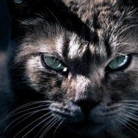 ぎらりと睨むネコ