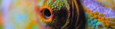 ぎょろんとした目のカメレオン