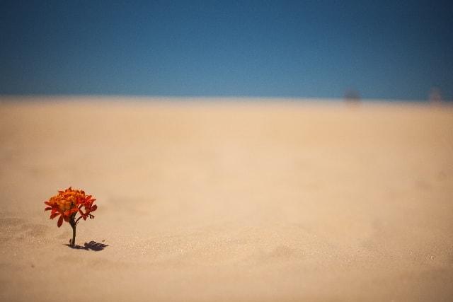 からっからからに乾いた砂漠