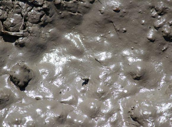 ぬめっとした泥