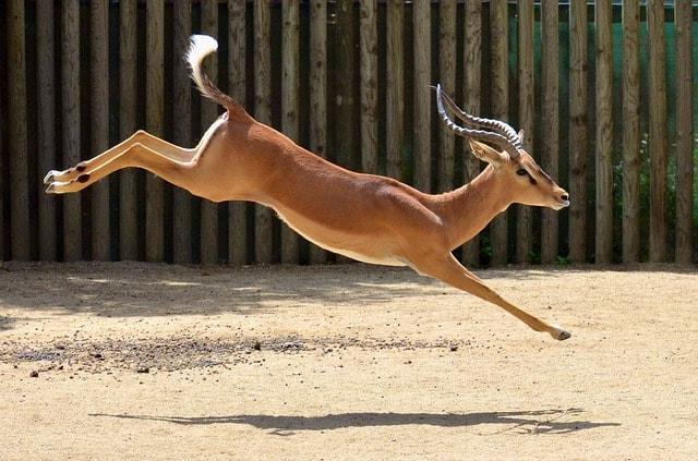 するりするりと身を躱す鹿