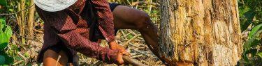 ずたずたと木を伐る男性