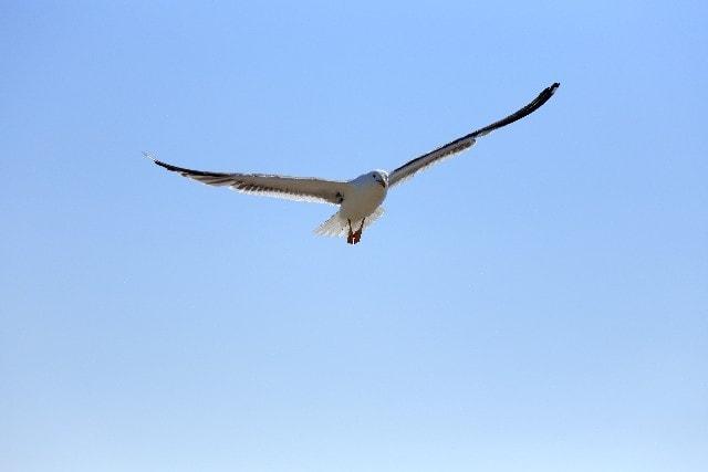 ぎゅーんと滑空する鳥