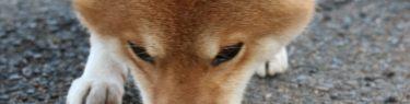 地面をくんくんと嗅ぐ犬