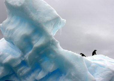 こちこちに凍った氷の大地