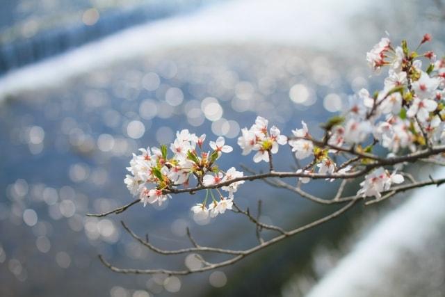 春のうららとした風景